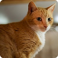 Adopt A Pet :: Sunsine - Charlotte, NC