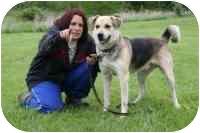 German Shepherd Dog/Husky Mix Dog for adoption in Elwood, Illinois - Jack (X-URGENT)