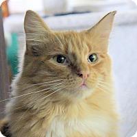 Adopt A Pet :: Pete - Fairfax, VA