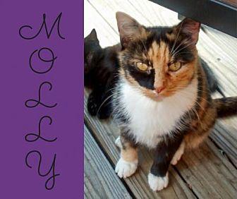 Calico Cat for adoption in Lansdowne, Pennsylvania - Molly