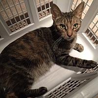 Adopt A Pet :: EV - Cambridge, ON