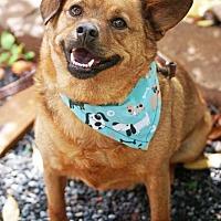 Adopt A Pet :: Stranger - Fayetteville, GA
