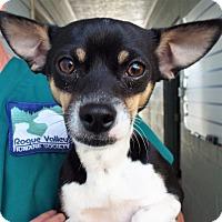 Adopt A Pet :: Dodger - Grants Pass, OR
