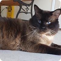 Adopt A Pet :: Sake - Diamond Springs, CA