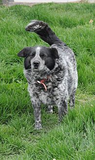 Australian Cattle Dog Mix Dog for adoption in Stafford, Virginia - Pepper