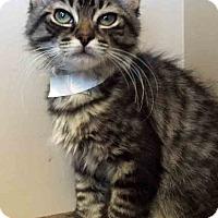 Adopt A Pet :: Jonas - Oswego, IL