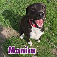 Adopt A Pet :: Monica - Victoria, TX