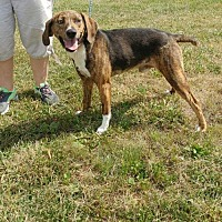 Adopt A Pet :: Jake - Trenton, MO