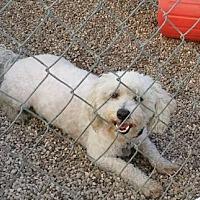 Adopt A Pet :: Kevin - Mukwonago, WI
