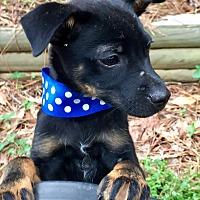Adopt A Pet :: Miller - Monticello, GA