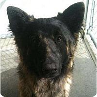 Adopt A Pet :: Jake - BC Wide, BC