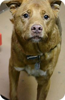 Shepherd (Unknown Type) Mix Dog for adoption in Fruit Heights, Utah - Hoschie