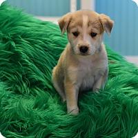 Adopt A Pet :: Parish II - South Dennis, MA