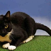 Adopt A Pet :: Spring-Ahead Sadie - Naples, FL