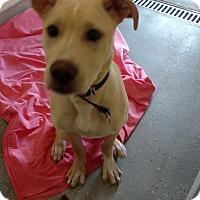 Adopt A Pet :: ROCKY - Sandusky, OH