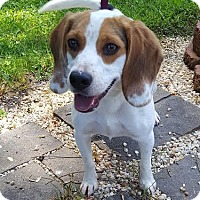 Adopt A Pet :: Russell - Westminster, MD