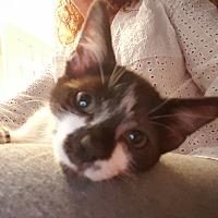 Adopt A Pet :: Sneezy - Smithfield, NC