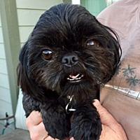 Adopt A Pet :: Candace - Pleasanton, CA