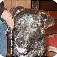 Adopt A Pet :: Sean-in Maine - kennebunkport, ME