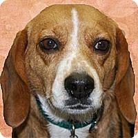 Adopt A Pet :: Stormy - Portland, OR