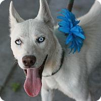 Adopt A Pet :: Leah - Canoga Park, CA