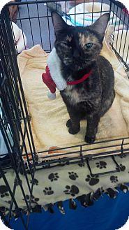 Domestic Shorthair Cat for adoption in Seneca, South Carolina - Priscilla