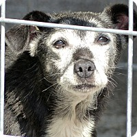 Adopt A Pet :: Worthy--RESCUED! - Marlinton, WV