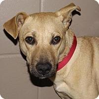 Adopt A Pet :: Vinny - Oxford, MS