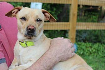 Dachshund/Pug Mix Dog for adoption in Westminster, Maryland - Marissa