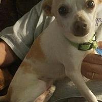 Adopt A Pet :: Ritz - Centerville, GA