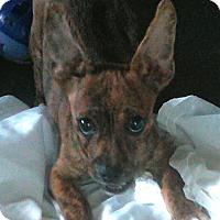 Adopt A Pet :: Charlie - Daleville, AL