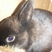 Adopt A Pet :: A1692820 - Los Angeles, CA