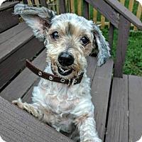 Adopt A Pet :: Frankie - Arlington, VA
