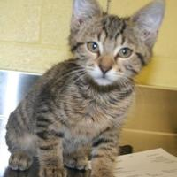 Adopt A Pet :: Turnip - Green Bay, WI