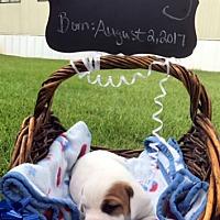 Adopt A Pet :: STOWAWAY - ADOPTION PENDING! - Pennsville, NJ