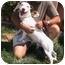 Photo 1 - Basset Hound Mix Puppy for adoption in Berkeley, California - Shorty