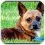 Photo 2 - Chihuahua Mix Dog for adoption in Montreal, Quebec - Broady