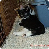 Adopt A Pet :: Cash - Acme, PA