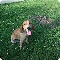 Adopt A Pet :: Dunkel - Cincinnati, OH