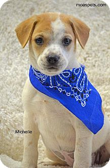 American Bulldog/Pointer Mix Puppy for adoption in Danielsville, Georgia - Michelle