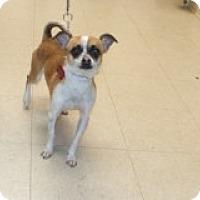 Adopt A Pet :: Ayden - Tinton Falls, NJ