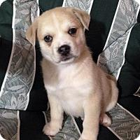 Adopt A Pet :: Cashew - Saskatoon, SK