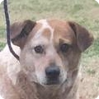 Adopt A Pet :: Tanner - Mount Pleasant, SC