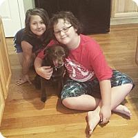 Adopt A Pet :: Buddy - Chesterfield, VA