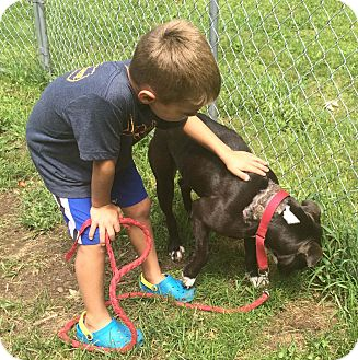 Boxer Mix Dog for adoption in Bloomfield, Connecticut - Canterbury