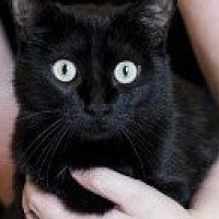 Adopt A Pet :: Francine - Baton Rouge, LA