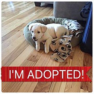 Shepherd (Unknown Type)/Rottweiler Mix Puppy for adoption in Regina, Saskatchewan - Tista
