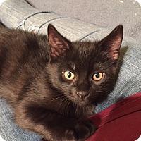 Adopt A Pet :: Arrow (LE) - Little Falls, NJ