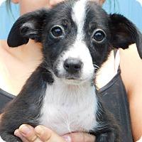 Adopt A Pet :: Fia - Oakdale, LA