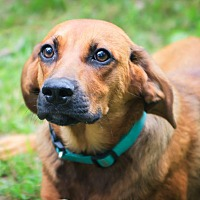 Adopt A Pet :: Tom - Parsippany, NJ
